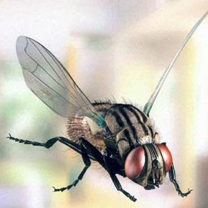 Рингтон Летающая муха